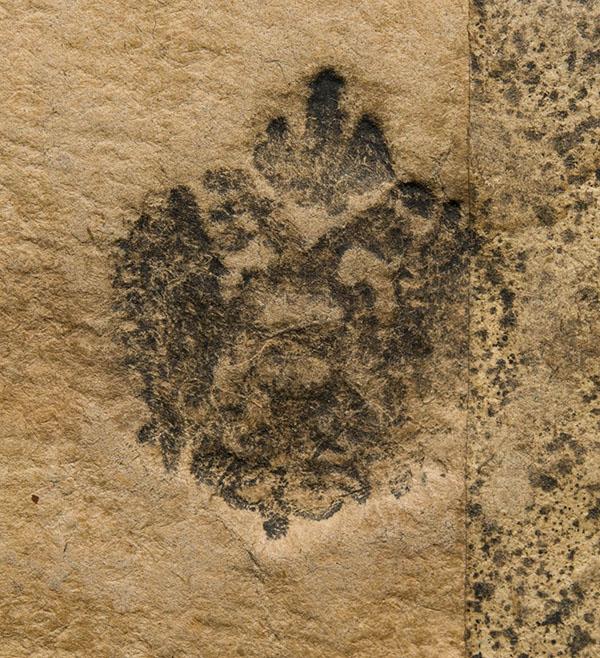 Timbro (aquila bicipite coronata) Nazione Germanica Artista 1546-1801
