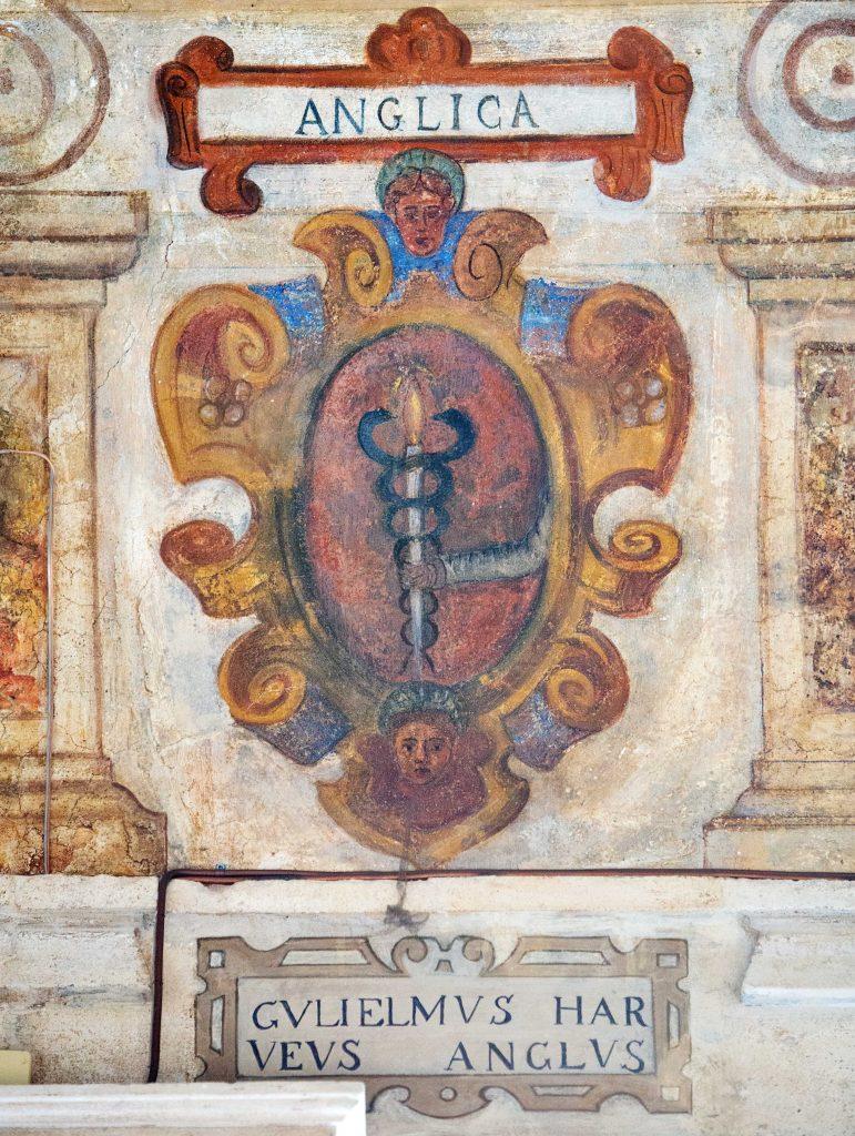 Lo stemma di William Harvey nel Cortile Antico di Palazzo Bo a Padova
