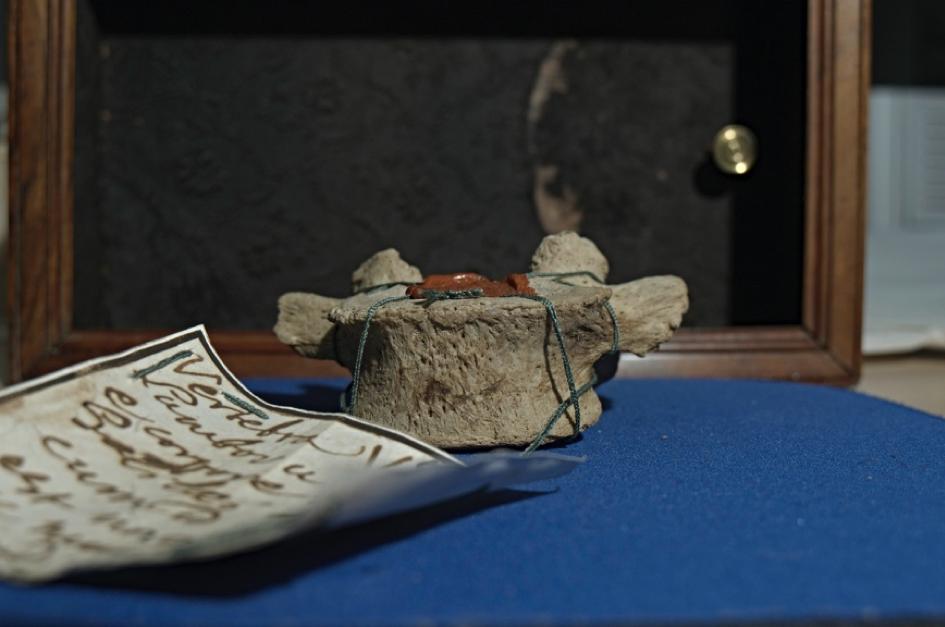 La vertebra L5 di Galileo Galilei donata all'Università di Padova, dopo vari passaggi di mano fra collezionisti, nel 1823